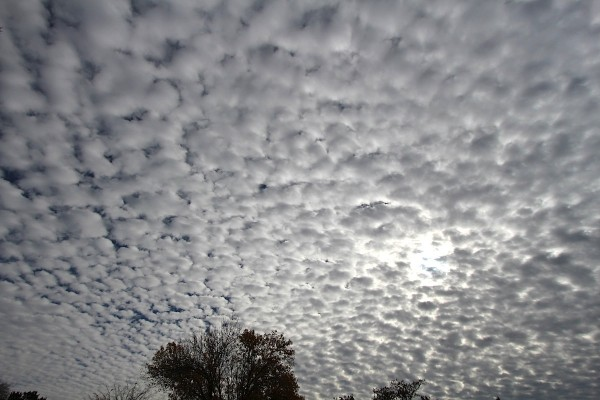Altocumulus clouds checkered the sky late this morning.